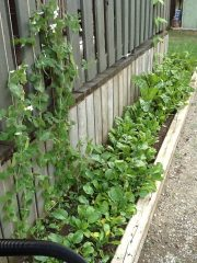 a small reclaimed sidebed