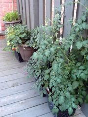increase growing space with containers