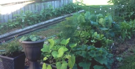 Limited vegetable beds - solutions to increase growing space